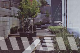 Melbourne, Melbourne Metropolitan, Melbourne Eastern Suburbs, Melbourne Western Suburbs, Melbourne Northern Suburbs, Victoria, Vegetation Supply, Vegetation Planting, Tree Planting, Tree, Shrub, Shrub Planting, Grass Supply, Grass Planting, Flower Planting
